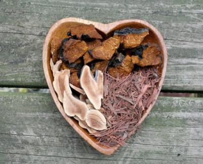 Chaga and Reishi : King and Prince of the Mushroom Kingdom